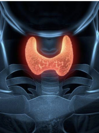 Importance of Thyroid Disease Awareness