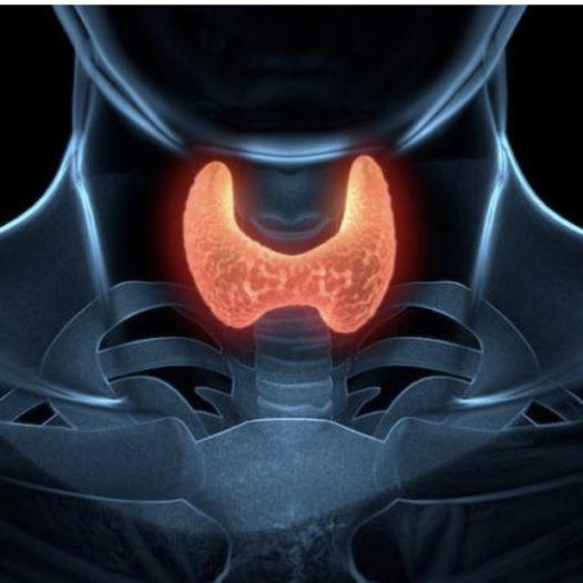 Importance of Thyroid Disease Awareness
